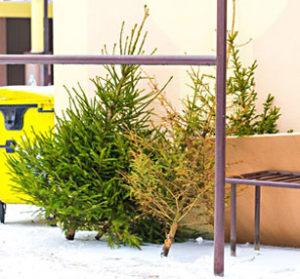 Vor dem Haus deponierte Weihnachtsbäume