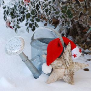 weihnachtsbaum-pflege